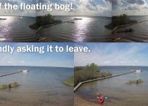 floating-bog